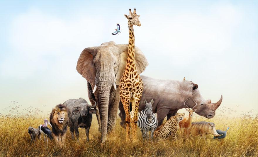 Shutterstock 727249072